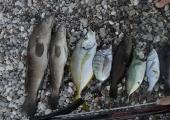 Bol çeşitli balık